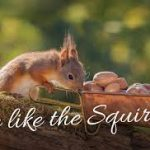 Be The Squirrel