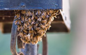 bees-under-mailbox-pestcemetery