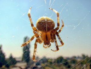 spider-2150678