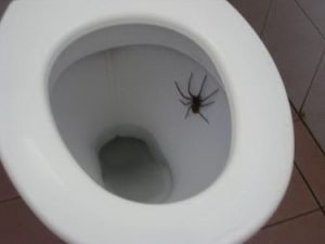 spider-in-toilet-4